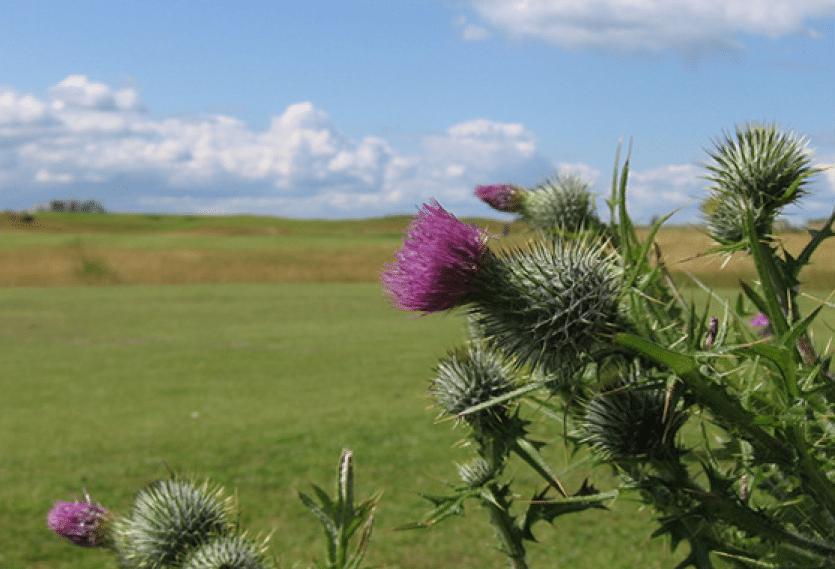 Ladies Get into Golf at Craigielaw